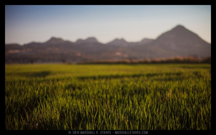 California's diverse landscape on full display here as a lush rice field sweeps all the way west to the base of the Sutter Buttes.